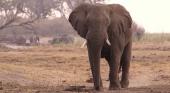 Elefante en un parque natural