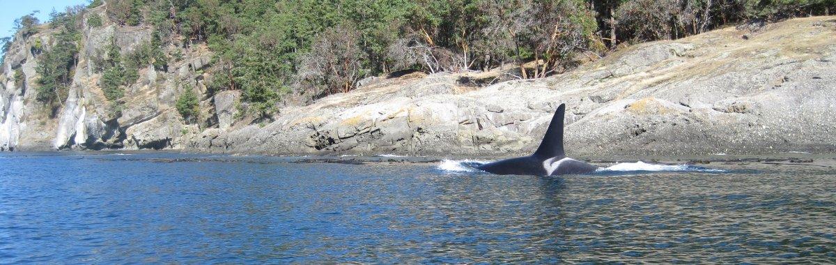 Orca en la costa