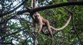 Mono en un arbol