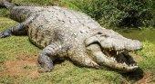 Dos cocodrilos devoran a un famoso cazador y organizador de safaris