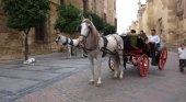 Coche de caballos paseando a visitantes