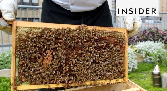 Hotel de Nueva York cultiva su propia miel