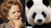 El día que Margaret Thatcher dijo 'no' a volar con un oso panda