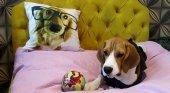 Hotel de lujo para perros