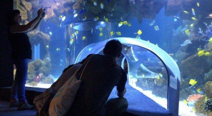 El nuevo acuario de Las Palmas de Gran Canaria abre sus puertas