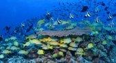 Hawái contará con una espacio protegido tres veces más grande que España