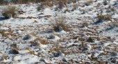Nieve en el desierto