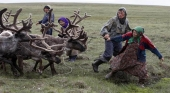 Siberia podría tener que sacrificar 250.000 renos por el aumento de la temperatura