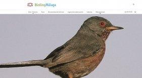 Birding Málaga, página para amantes de las aves