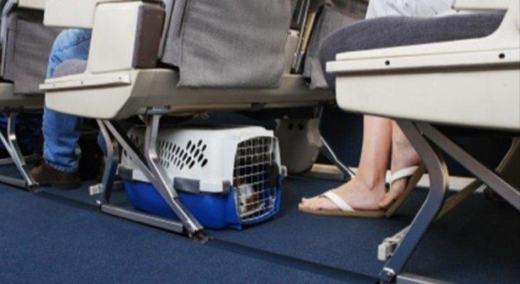 Muchas mascotas murieron en vuelos de United en 2017