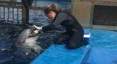 Una cuidadora interactúa con un delfín en el Oceanogràfic
