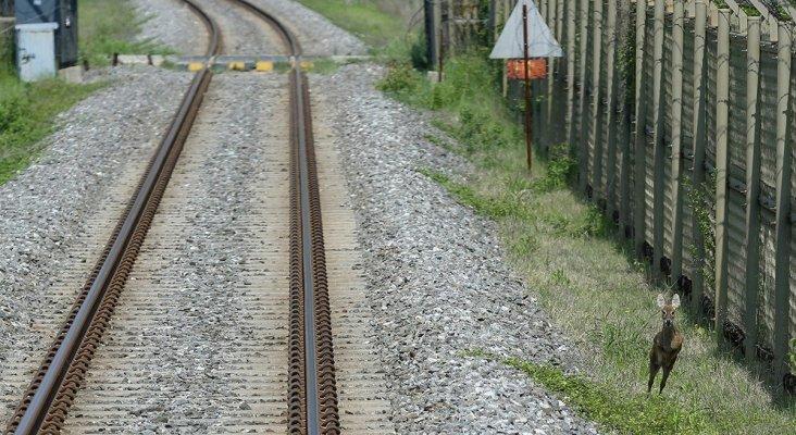 Un tren que ladra, el último invento de Japón