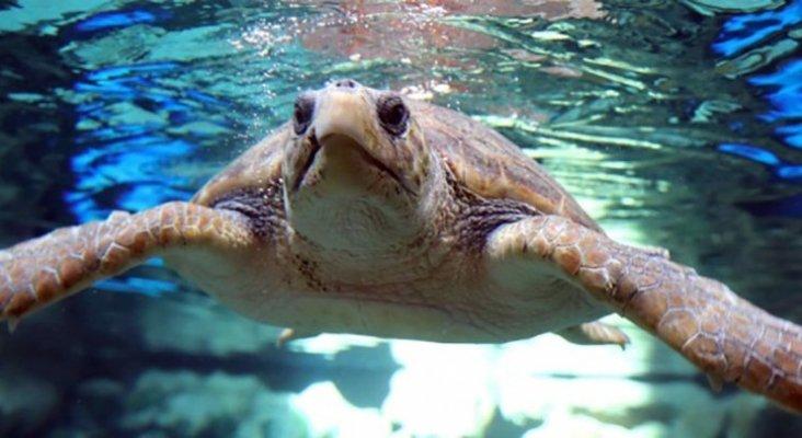 Poema del mar se centra en la recuperación de tortugas. Foto Efe