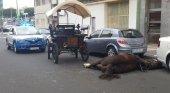 Muere un caballo de carruaje en La Isleta