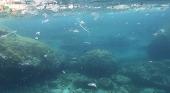 Mallorca Blue denuncia que la basura de las calles termina en el mar