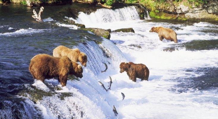 Trump permitirá cazar cachorros de osos y lobo