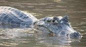 Una turista francesa, mordida por un cocodrilo tras intentar sacarse un selfie