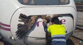 El AVE atropella un pájaro cada 350 kilómetros