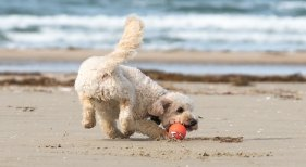 Guía de las playas españolas que admiten perros este verano