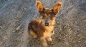 "Adoptar un perro en Fuengirola ""te sale gratis"""