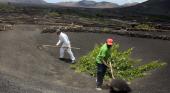 TUI Care lanza una iniciativa para preservar el cultivo tradicional de la uva|Foto: TUI Care Foundation