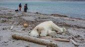 Matan a oso polar por atacar a cruceristas