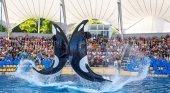 Loro Parque Orcas | Foto: Turismo Tenerife