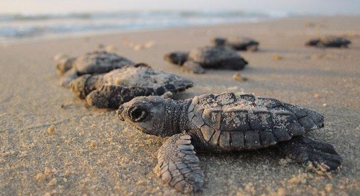 TUI lanza un programa para salvar a un millón de tortugas Foto: TUI Care Foundation