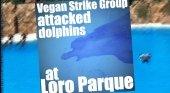 'Eco terroristas' se cuelan en delfinario de Loro Parque y exigen su cierre