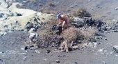 """Turista """"destroza"""" colada volcánica junto a Parque Nacional"""