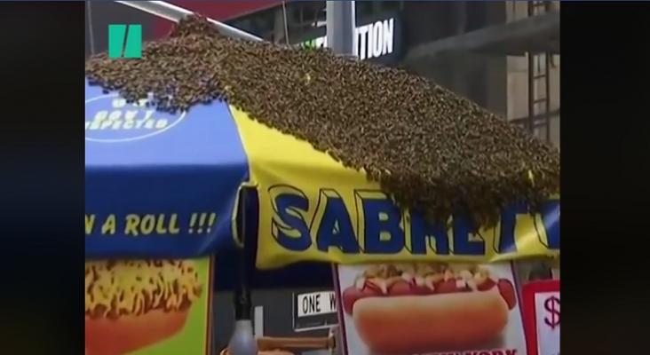 Pánico en Time Square por un enjambre de abejas|Foto: fotograma vídeo HuffPost News vía Facebook