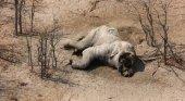 Caza furtiva siega la vida de 90 elefantes en Botsuana|Foto: Elefantes Sin Fronteras vía BBC