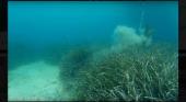 Mueven 4.400 naves fondeadas sobre posidonia incorrectamente|Foto: Diario de Mallorca