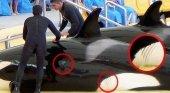 PETA se moviliza contra TUI para que deje de vender entradas a SeaWorld y Loro Parque|Foto: PETA