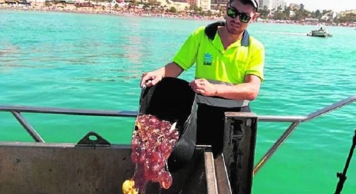 Costa del Sol retiró 80 toneladas de medusas durante el verano Foto: Sur