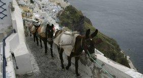 Los turistas con sobrepeso no podrán pasear en burro en Grecia|Foto: CNN