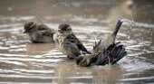 El birdwatching en peligro en España y Europa|Foto: El Confidencial