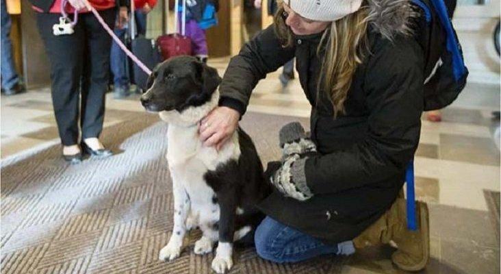 Un hotel aloja a perros abandonados para promover la adopción|Foto: Notas de Mascotas