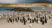 Se vende una de las islas Malvinas poblada por miles de pingüinos|Foto: Travel+Leisure