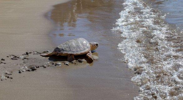 """""""Deseamos no volver a verlos, eso sería la mejor noticia"""" Foto: El Poema del Mar"""