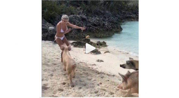 Cerdos muerden a Michelle Lewin cuando practicaba fitness en la playa