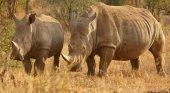 Pena de muerte para los cazadores furtivos en Kenia