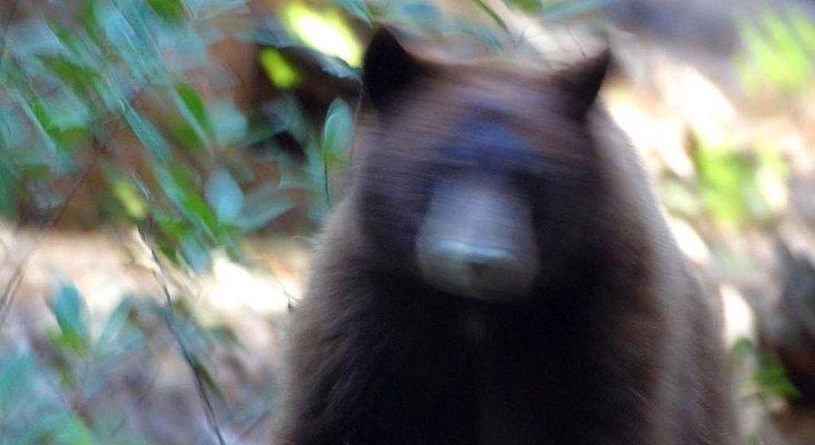 Excursionista sobrevive al ataque de un oso en mitad de la montaña