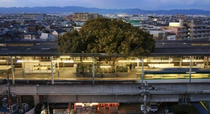 El árbol sagrado que sobrevivió a la ampliación de una estación de tren | Foto: Kosaku Mimura/Nikkei vía Cultura Inquieta