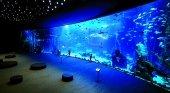 El Acuario Poema del Mar se incorpora a la asociación Gran Canaria Blue