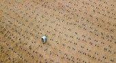 Cientos de huellas homenajean a los soldados caídos en la Operación Tigre | Foto: therebutnotthere.org.uk
