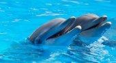 Prisión para el director y veterinario de un delfinario por maltrato animal