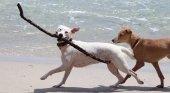 Mallorca 'pet friendly': una nueva playa habilita un espacio para perros