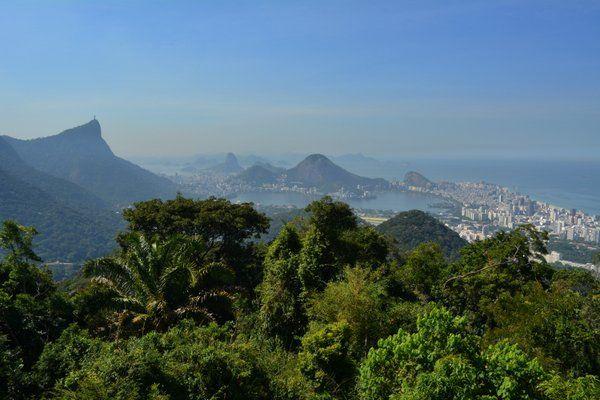 Repueblan el mayor bosque urbano del mundo