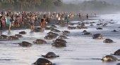 Cientos de turistas impiden a las tortugas anidar en Costa Rica